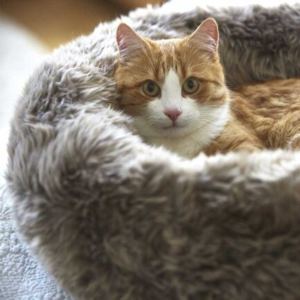 soft cat bed my dear