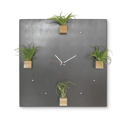 Wall Clock with Plants Jungle Clock by designobject with 4 magnetic cubes in natural oak wood containing 4 Tillandsia plants